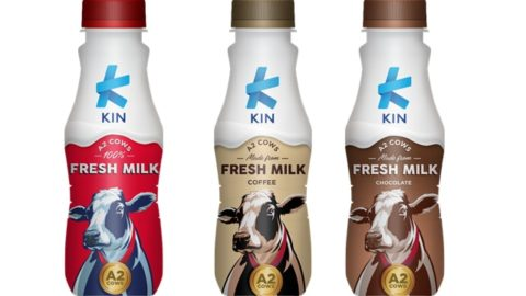 manfaat minum susu, manfaat minum susu bagi orang dewasa, manfaat minum susu bagi anak, manfaat minum susu kin fresh milk, harga kin fresh milk, rasa kin fresh milk, kin fresh milk original, kin fresh milk coffee, kin fresh milk chocolate