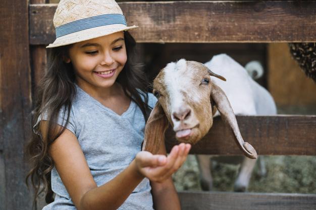practical life montessori, apa itu montessori, contoh aktivitas practical life anak 3 tahun