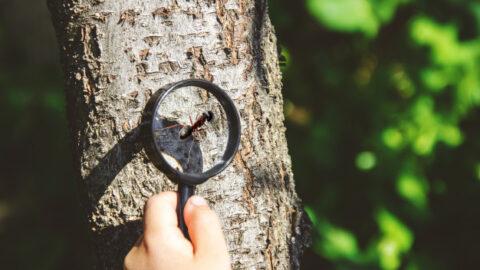 anak suka benda kecil, the period sensitive montessori